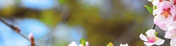flower3-banner.jpg