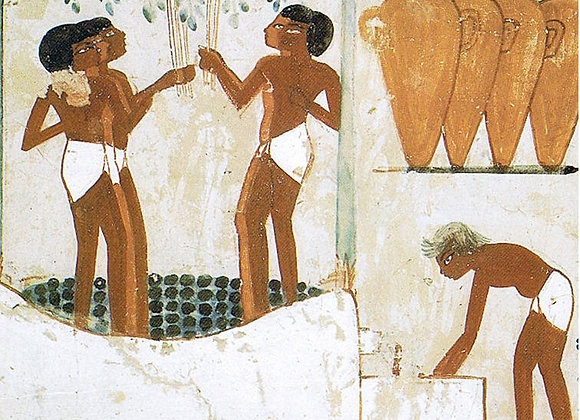ENOLOGÍA EN EL ANTIGUO EGIPTO