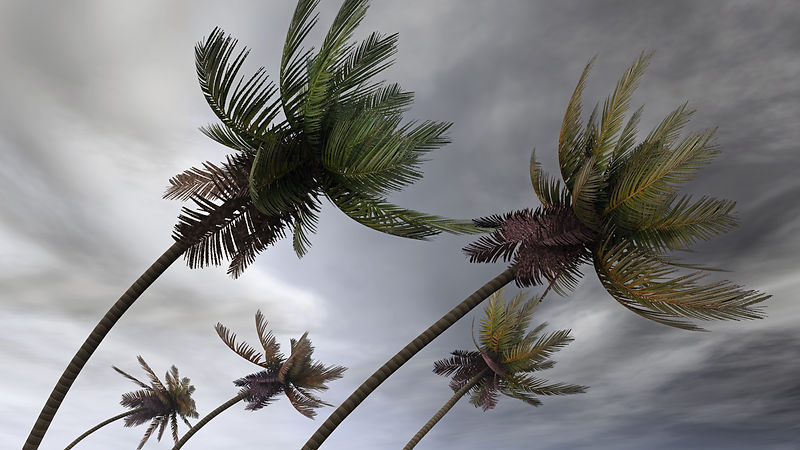 bigstock-palms-at-hurricane-12116309.jpg