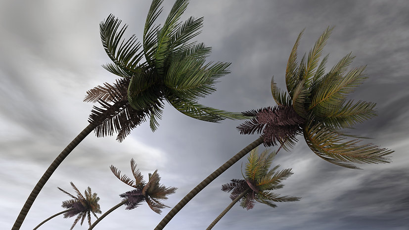 bigstock-palms-at-hurricane-12116309.jpg