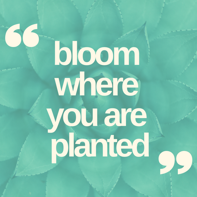 bloom where you are planted.png