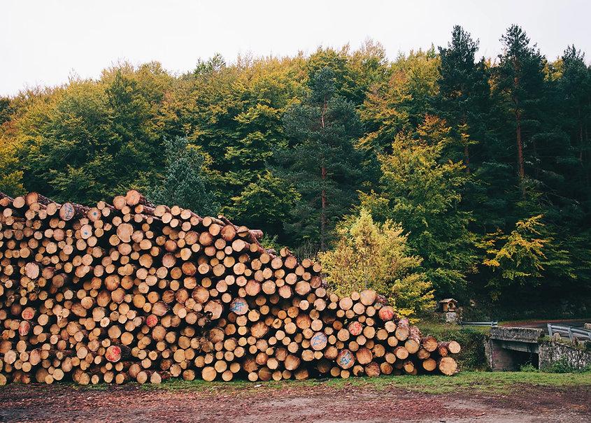 Stapel von Wald Protokolle