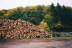 Pile of forested logs