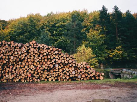 Forst- und Holzwirtschaft sind für die Speicherung von klimaschädlichem CO2 systemrelevant