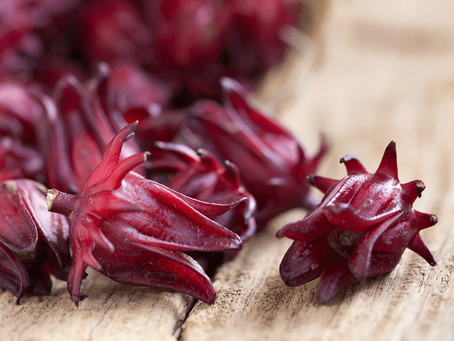 Hibisco: A flor sendo uma fonte poderosa contra doenças
