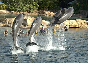 Disney-Discovery-Cove