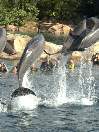 Pacote All Star Teen com Discovery Cove