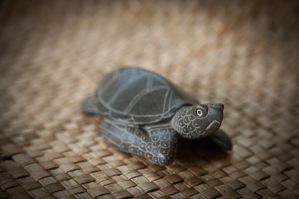 perks_turtle_05