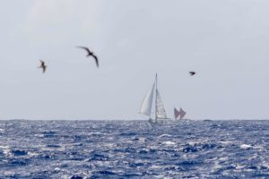 Hokule'a and Gershon II sailing for Ra'iatea - ©john_bilderback From Malama Honua, Hokule'a - A Voyage of Hope coming fall 2017 from Patagonia""
