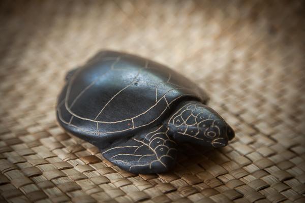 perks_turtle_03