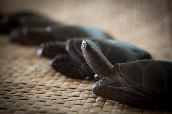 perks_turtle_12
