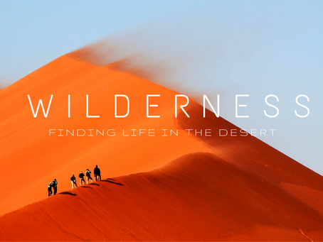 Wilderness: Finding Life in the Desert