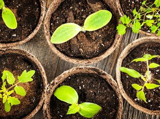 Seed Investing: An opportunity to grow the impact investing movement