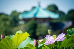Tokyo Lotus
