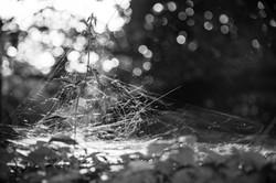 Webs of Nippon