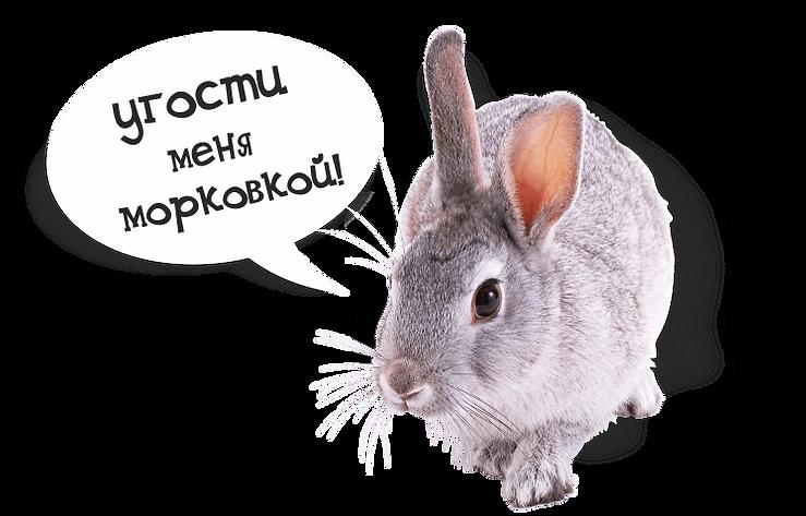 krolik.png