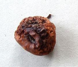 heirloom apple.jpg