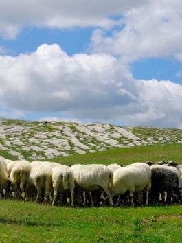 Being a Shepherd: 11/12 Chapel