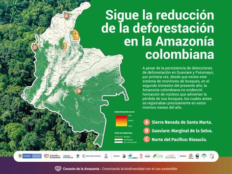 Sigue la reducción de la deforestación en la Amazonía colombiana