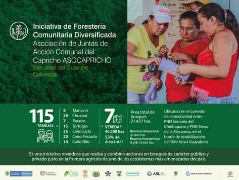 Iniciativa de Forestería Comunitaria Diversificada