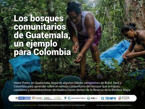 Los bosques comunitarios de Guatemala, un ejemplo para Colombia.