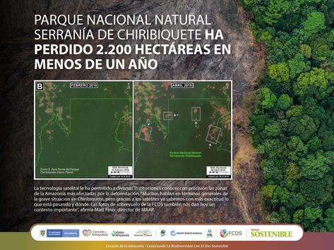 Parque Nacional Natural Chiribiquete ha perdido 2.200 hectáreas en menos de un año