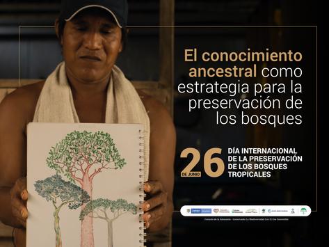 El conocimiento ancestral como estrategia para la preservación de los bosques