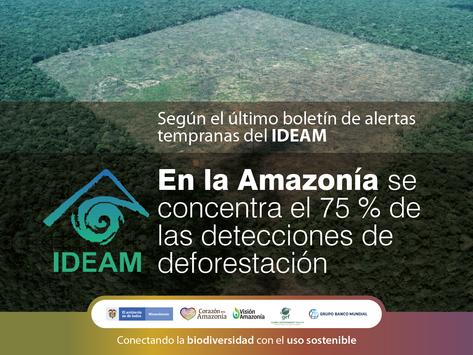 En la Amazonía se concentra el 75 % de las detecciones de deforestación