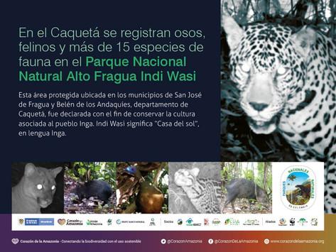 Se registran osos, felinos y más de 15 especies de fauna en el PNN Alto Fragua Indi Wasi