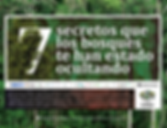 bosques_Mesa de trabajo 1 copia 28.png