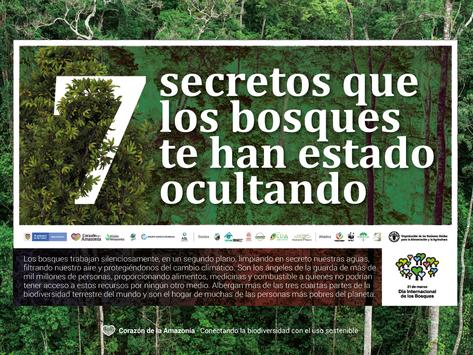 Siete secretos que los bosques te han estado ocultando