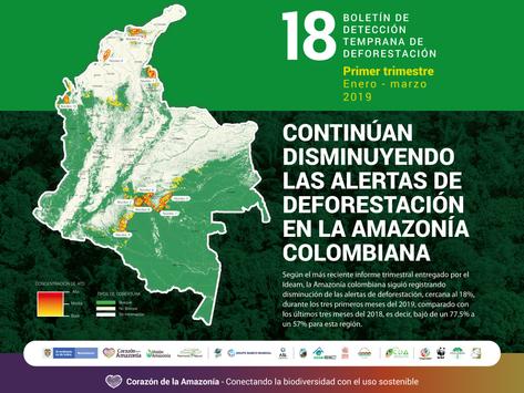 Continúan disminuyendo las alertas de deforestación en la Amazonía colombiana
