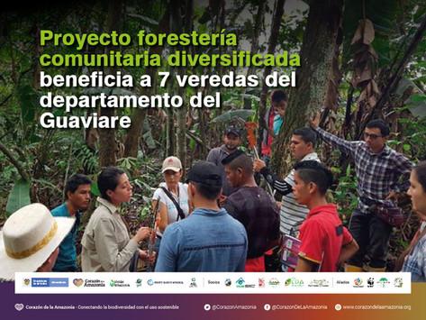 Proyecto forestería comunitaria diversificada beneficia a 7 veredas del departamento del Guaviare