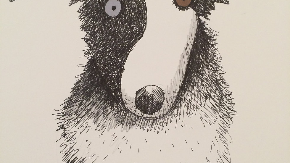 Dog with 2 Eye Colours