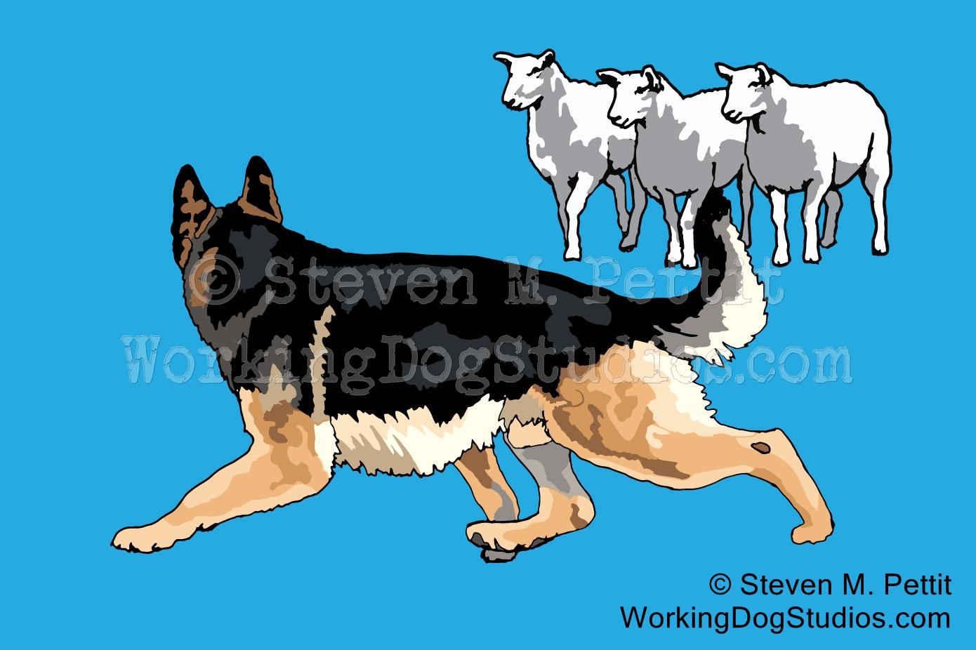 GSD-HERD-back-w-sheep-EMB-7-18