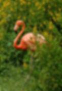 db_FlamingoFlowers14.jpg