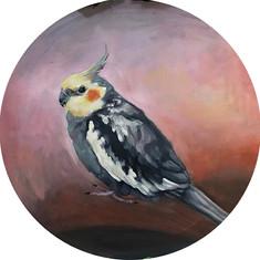 Pigwidgeon Needletoes