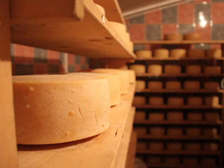 Agritourism Sia - Champion Cheese from the Istrian Sheep