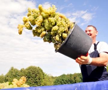Feravino - in the vineyards of Feričanci
