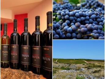 Poljak Wines - Champion Wines from the Best Dalmatian Terroir