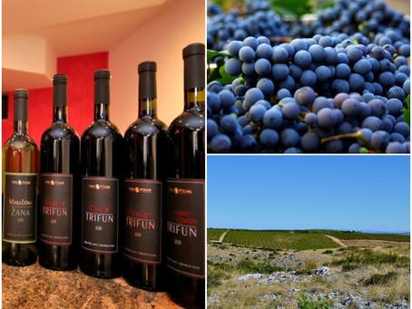 Vina Poljak - šampionska vina najboljeg dalmatinskog terroira