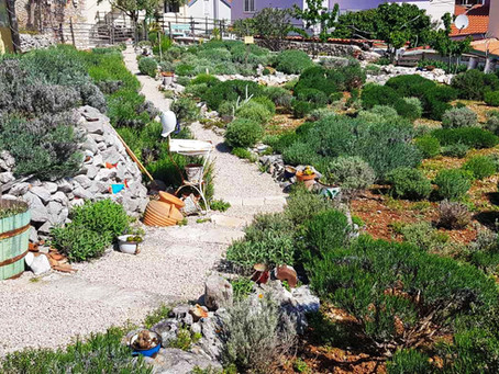 Lošinj fragrant garden