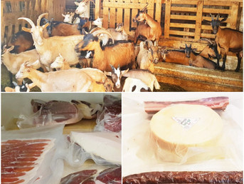 OPG Baljak - in the company of Lošinj lamb and goat cheese