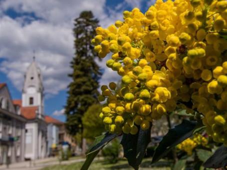 Nova Gradiška - in the borderland