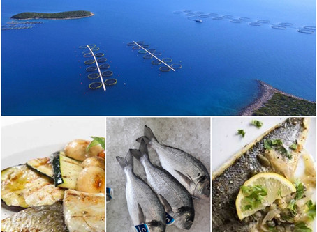 Cromaris - a tasty and healthy source of white fish