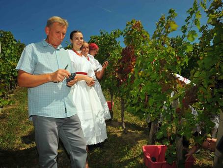 Svi u vinograd!