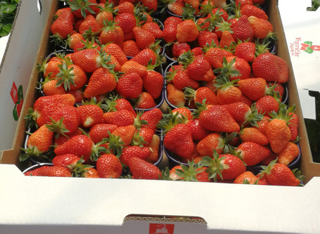 Spring is time for Vrgorac Strawberries