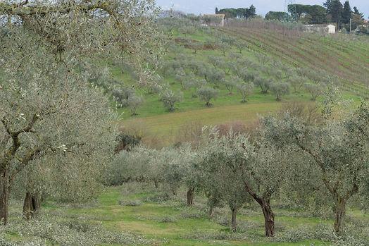 azienda_agricola_casale_del_farfa_conti_