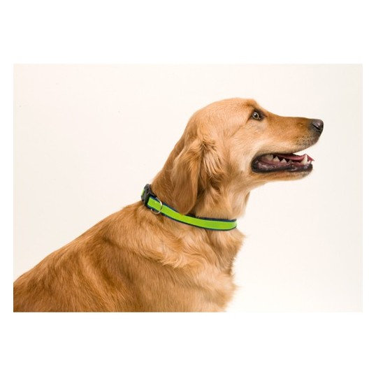 collar reflectante perros