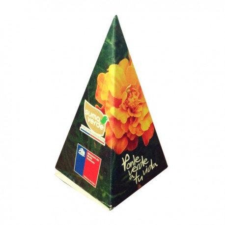 Pirámide Con semillas